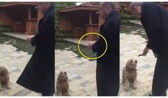 Проправительственные СМИ показали, как Эрдоган кормит огурцом собаку. Соцсети упали со смеху: Принял собаку за барана!