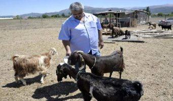 Турецкий клуб обменял 18 футболистов на 10 коз