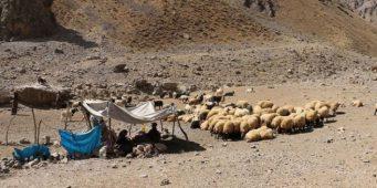 Сибирская язва погубила более 200 животных в турецком Хаккари