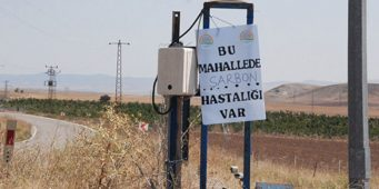 Первая смерть от сибирской язвы в Турции
