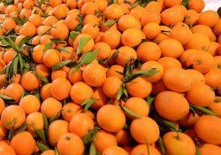 В России пресечен ввоз 550 тонн зараженных плодовой мухой мандаринов из Турции