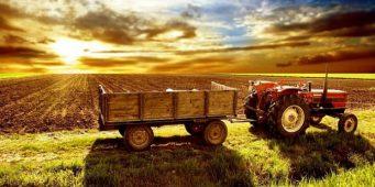 «Сельское хозяйство Турции гибнет»