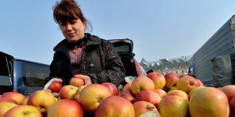 Турецкие яблоки не попали на калининградские прилавки