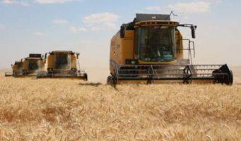 Турция закупит 250 тысяч тонн пшеницы
