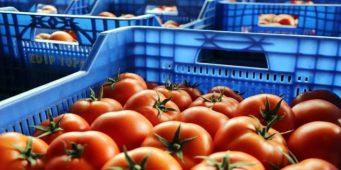 Возвращенные Россией небезопасные продукты продаются на турецких рынках?