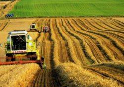 В Турцию за 18 лет ввезли сельскохозяйственной продукции на 104,6 млрд долларов