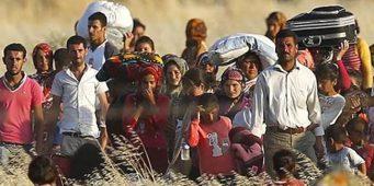 Сколько всего сирийцев в Турции?