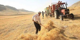 Доллар ударил по турецким фермерам