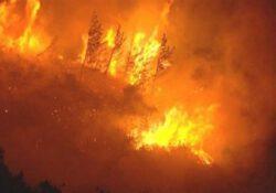ПСР и ПНД отклонили предложение о создании парламентской комиссии по сохранению лесов