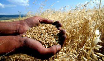 Производство пшеницы на душу населения в период ПСР снизилось на 22 процента