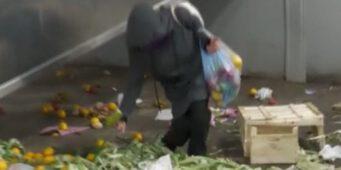 При режиме ПСР турки едят выброшенные в мусор фрукты и овощи
