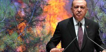 Реакцию на пожары Эрдоган пытается «потушить» перестановками в правительстве